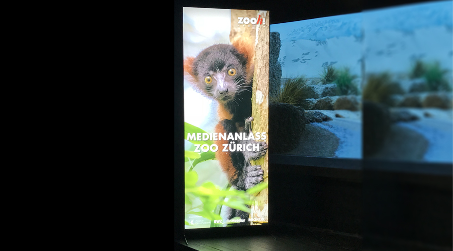 Zoo Zuerich Website 2